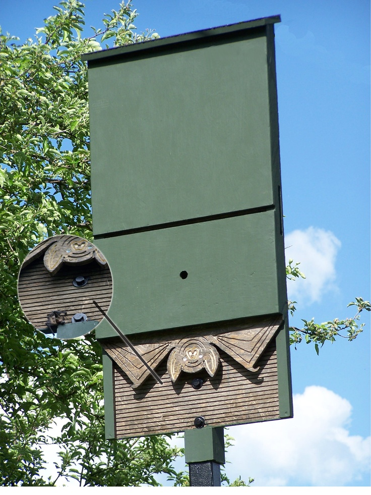 Hubby's custom bat house | Plants & Gardening | Bat house ...