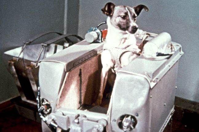 Hace 60 años la URSS enviaba al espacio a la perra Laika - Teletica