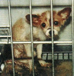Stop Animal Testing | Stop Animal Testing Petition