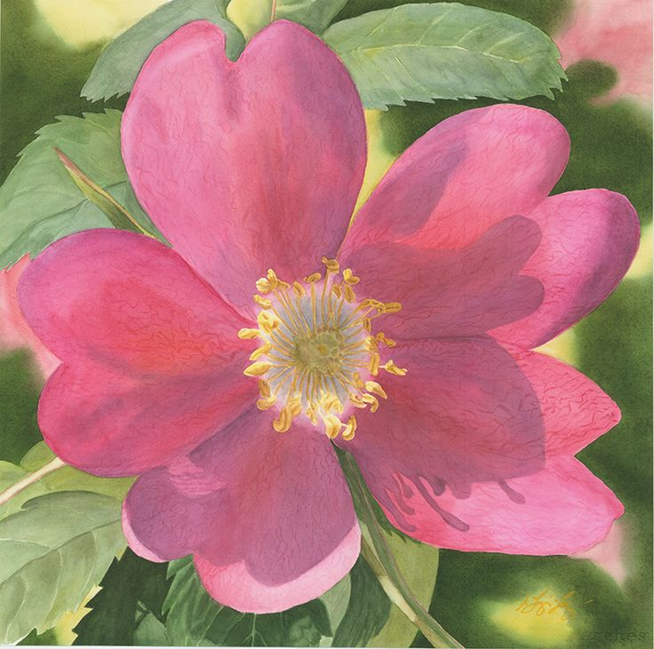 """Joys Sweetness"", Watercolour, 20x20 inches, SOLD, Shawna Lampi-Legaree"