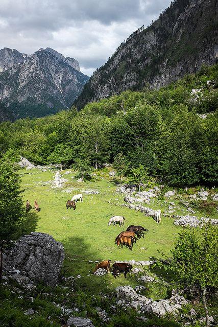 Valbona, Albania ... Book & Visit ALBANIA now via www.nemoholiday.com or as alternative you can use http://albania.superpobyt.com. For more option visit http://holiday.superpobyt.com