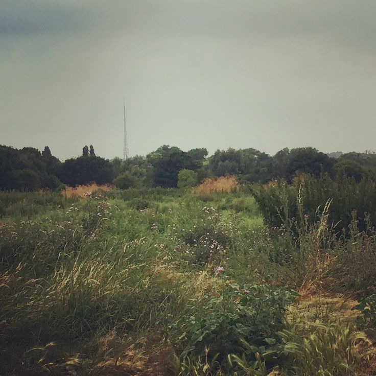 First day of the crickets at South Norwood Country Park, Summer is really here and I love how she sounds. The noises of nature are totally inspiring