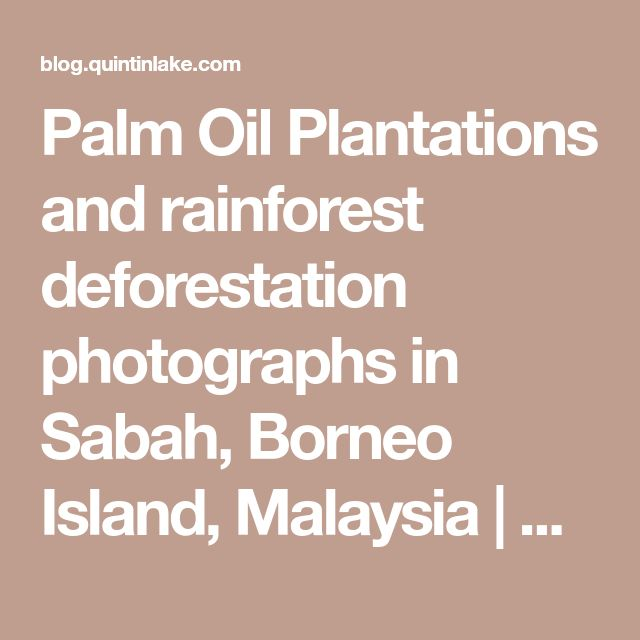 Palm Oil Plantations and rainforest deforestation photographs in Sabah, Borneo Island, Malaysia | Geometry & Silence