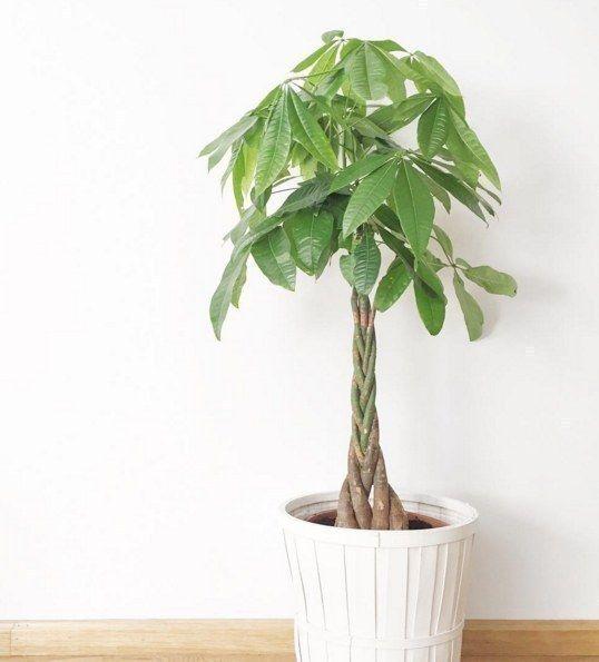 12 beste afbeeldingen van cactussen en vetplanten - Elegant ways to display air plants in your home ...