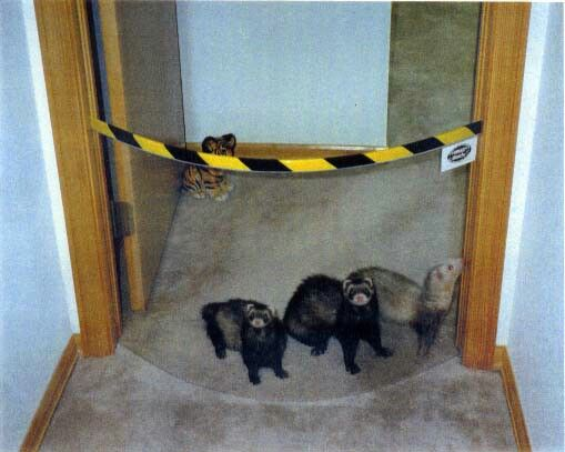 Pet Gate My Ferret Draco Pinterest Pet Gate Gate