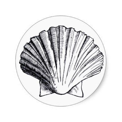 Black and White Seashells Drawings | Seashell Drawing