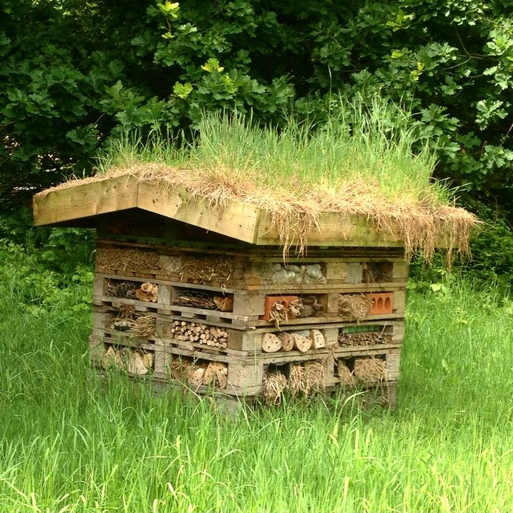 Bug hotel with grass roof