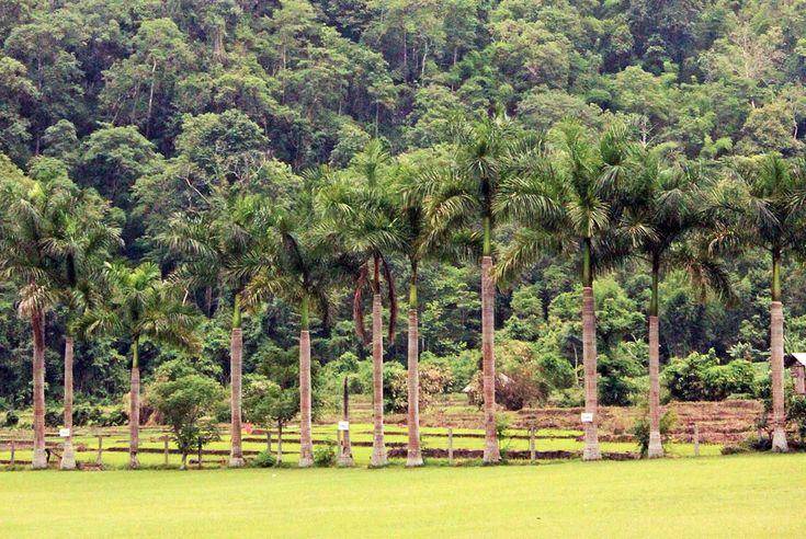 Csoda egy világ Észak-Thaiföld.Az ország itt Laosszal és Burmával határos: a tájat különleges sziklaformációk, abuja növényzet között csörgedező patakok, folyók, hegyi törzsek ősi települései,kisebb-nagyobb hangulatos városkák, rejtett hippi közösségek, hegyek, völgyekés sűrű erdők tarkítják. Az utazók körében Chiang Mai, Pai, Chiang Rai, és a körülöttük találhatótelepülések bizonyulnak a legnépszerűbbnek, de kevesen tudják, milyengyöngyszemet rejtenek a …