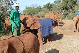Image result for world wildlife day  The DAVID SHELDRICK WILDLIFE TRUST saves and protects orphaned elephants.   Go to their website to adopt  and /or to donate to help in aid of their cause.