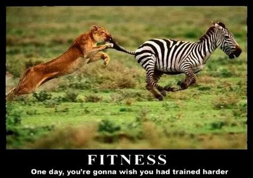 Tumblr. Yep , I will.Fit Quotes, Lion, Funny Pictures, Training Harder, Fit Inspiration, Funny Animal, Blog, Fit Motivation, Zebras