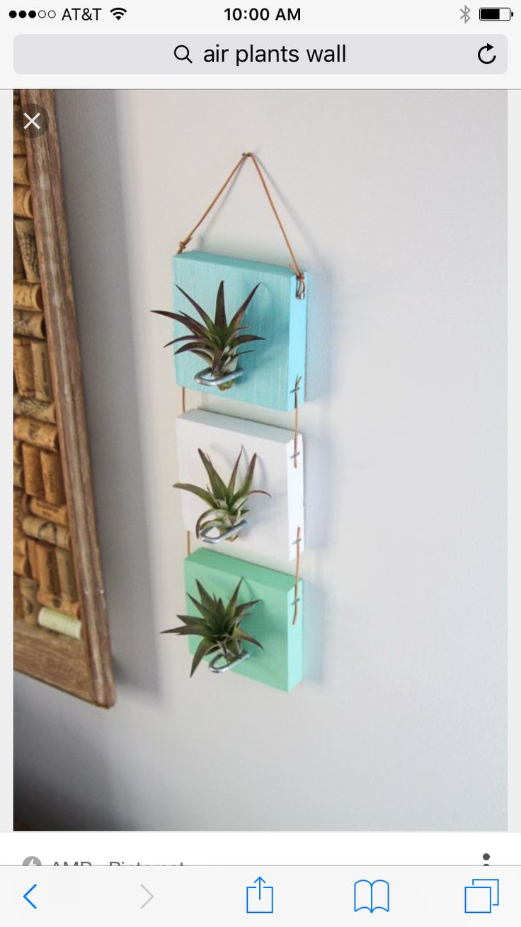 Items similar to Air Plant Wall Hanging // Cool Living Art // Wall Art on  Etsy