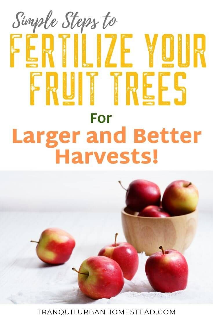 Fruit Tree Fertilizer How To Make And Apply Homemade Fertilizer Fruit Trees Fruit Growing Fruit