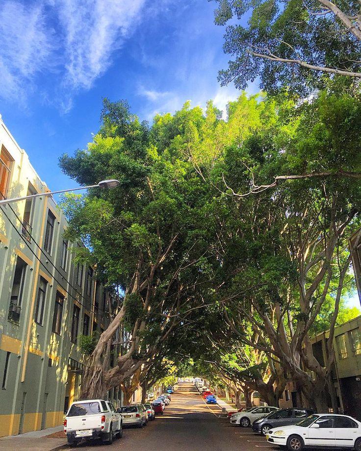 Northwood Street Newtown looking on Thursday ... #Newtown #camperdown #glebe #enmore #erskineville #innerwest #innerwestisbest #innerwestsydney #sydney #bluesky #trees #instacool #instagood #instadaily #follow #followme #portrait #green #blue #picoftheday #photooftheday #follow #followme #like by innerwest4lyf