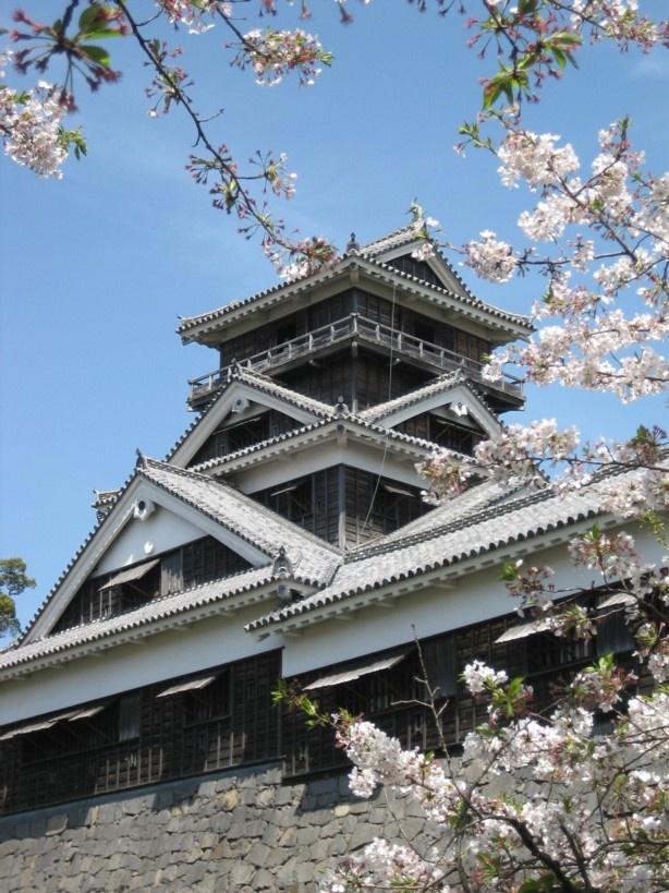#japan #cherryblossoms #kyusyu #kumamoto 熊本城