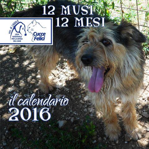 #strenne2015 - L'attesa è finita: è arrivato il Calendario 2016 delle #Cuccefelici! Scopri dove trovarlo!