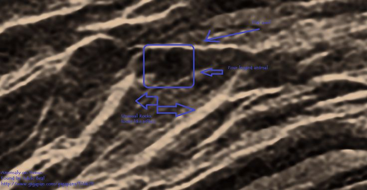 Venus Anomaly, Rocks that look like carved stone pillars and what looks like a flat roof with a four legged animal out the front. Found by Adele Beal http://www.gigapan.com/gigapans/174673