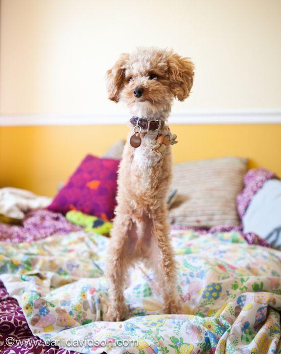 Meet Ramen Noodle, The Adorable Dog With No Arms