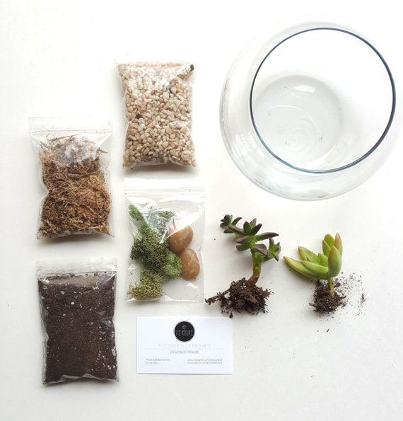 DIY succulent terrarium kit. Indoor plants . Check out this item in my Etsy shop https://www.etsy.com/listing/248148012/diy-terrarium-kit-terrarium-gift