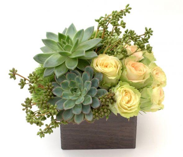 Green and creams, succulents