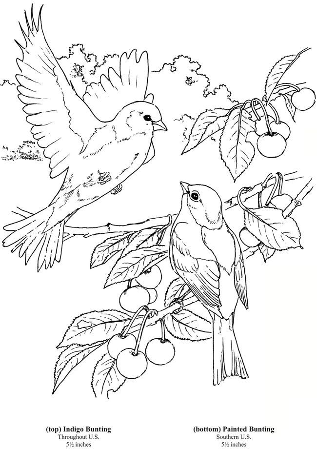 to Dover Publications 6 bird colouring pages