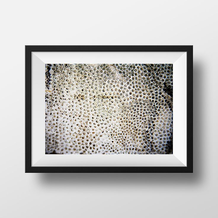 Abstract Photography, Coral Photo, Nature Photo, Nautical, Marine Life, Home Decor
