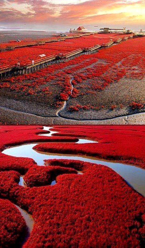 The Liao He River - Red beach, Panjin, China