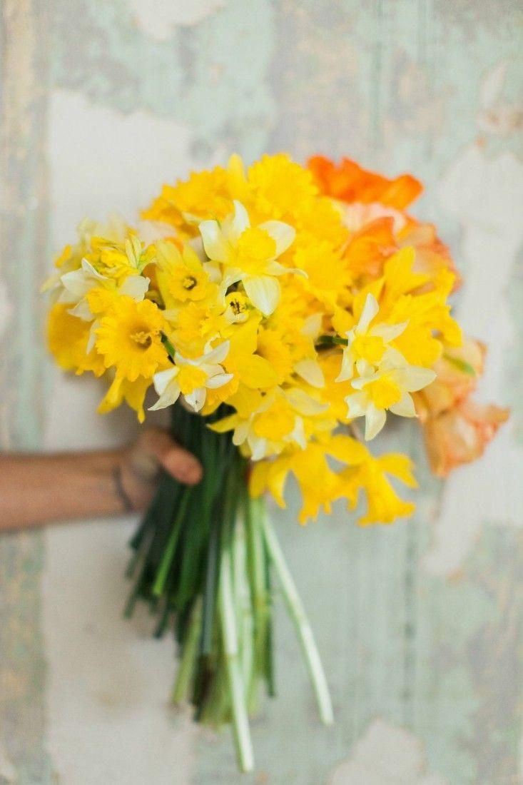the language of flowers | workshop with ashley bailey & ginny branch | photo by Haley Sheffield: Daffodils Weddingflowers, Daffodils Xxx, Happy Yellow, Daffodils Spring, Yellow Daffodils, Daffodils Yellow, Flower Photos, Bloom, Sheffield Daffodils