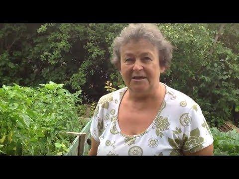 Magaságyás és paradicsom tejes permetezése | Biokiskertem | A biokert