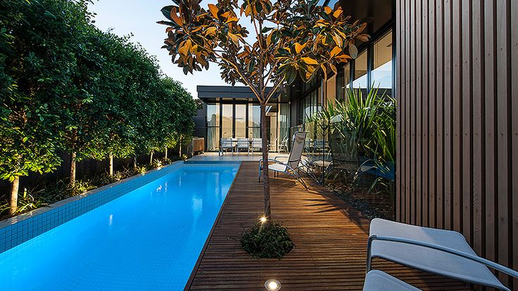 elegant lap pool with white tiled interior pleached ficus underplanted with liriope along the fence line and a magnolia planted into the deck pin