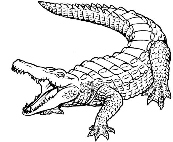 Crocodile Beautiful Skin Of Crocodile Coloring Page Coloring