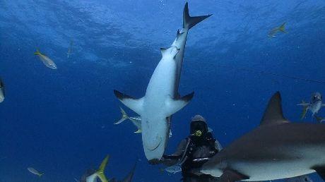 Amazing Shark Footage!