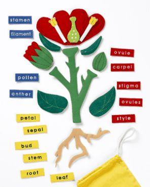 Parts of a Flower-Plant Felt Motifs | The Childminding Shop