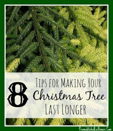 8 tips for making your Christmas tree last longer. #christmas #christmastrees #frugality