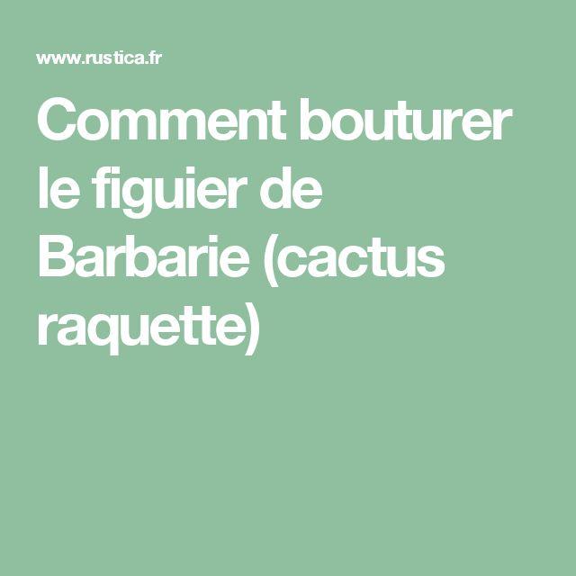 Comment bouturer le figuier de Barbarie (cactus raquette)