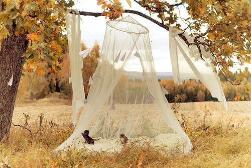 ~Cat, Tents, Dreams, Beds Canopies, Mosquitoes Nets, Places, Kittens, Fall Picnics, Autumn Photography