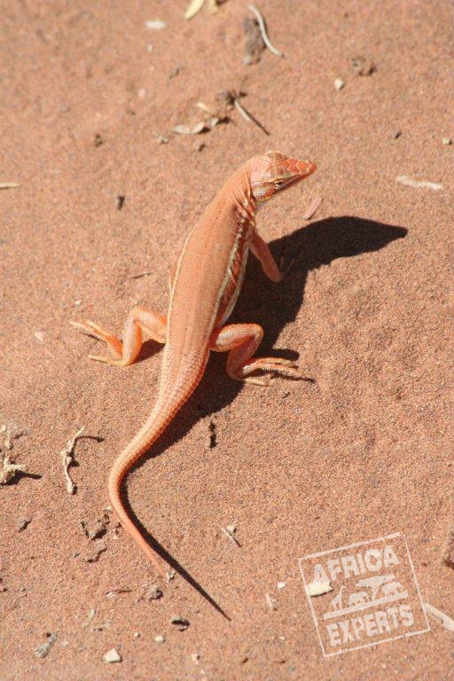 Namibia - eläimet