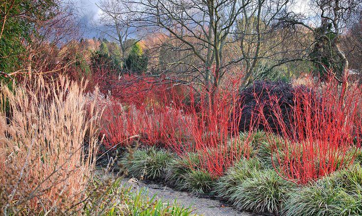 En hiver, les jardins se parent de couleurs vives. Spécialiste des écorces, le photographe Cédric Pollet en a capturé la surprenante beauté. Voici ses cinq conseils pour que vos massifs s'illuminent à la mauvaise saison.