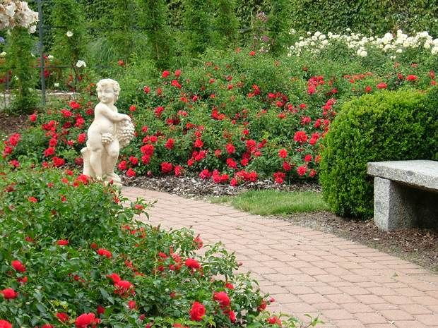 26 best images about flower carpet scarlet groundcover for Formal rose garden layout