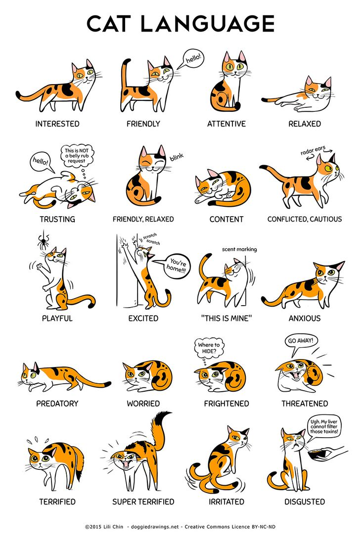 The Languages of Cats and Dogs