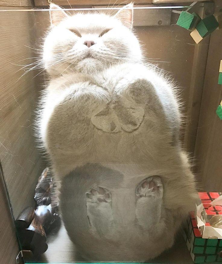 #kucingbikingemes ini kiriman dari : @catterydelano    punya #kucingbikingemes juga? follow dan tag @kucingbikingemes  jangan lupa pakai #kucingbikingemes   via #catsofinstagram #cat #cats #catofinstagram #cat_of_instagram #catstagram #catsoftheworld #catslover #catgram #catagram #catslife #kucing #kucingku #kucinglucu #kucingsaya #kucingimut