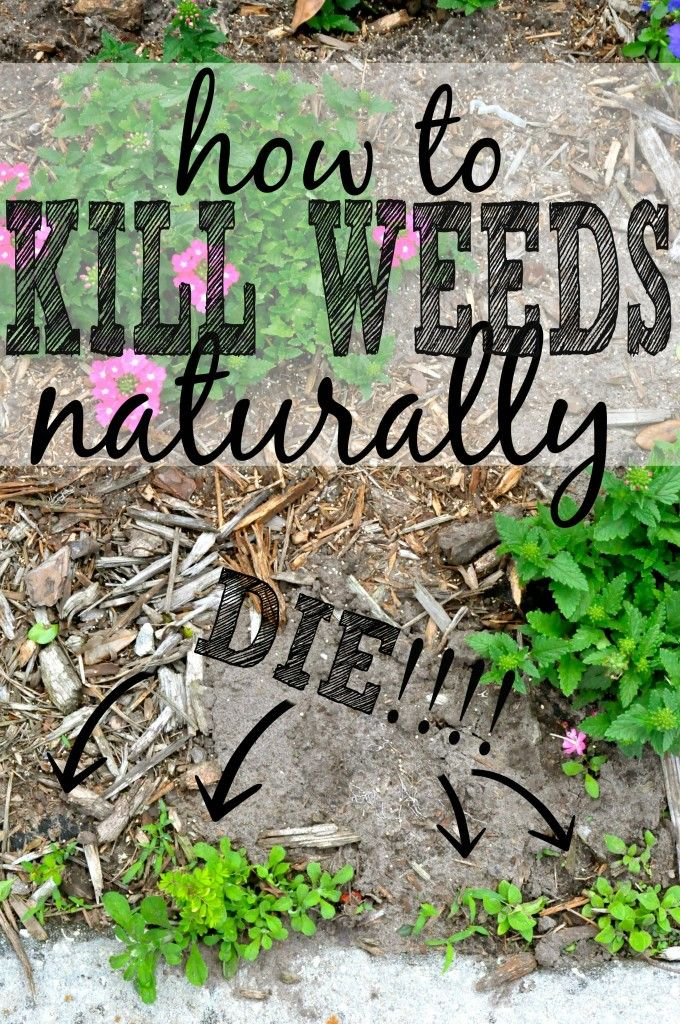 3 Killer Ways to Get Rid of Weeds Naturally #DIY #GARDENING