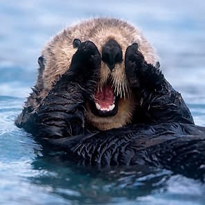 Pet Sea Otters