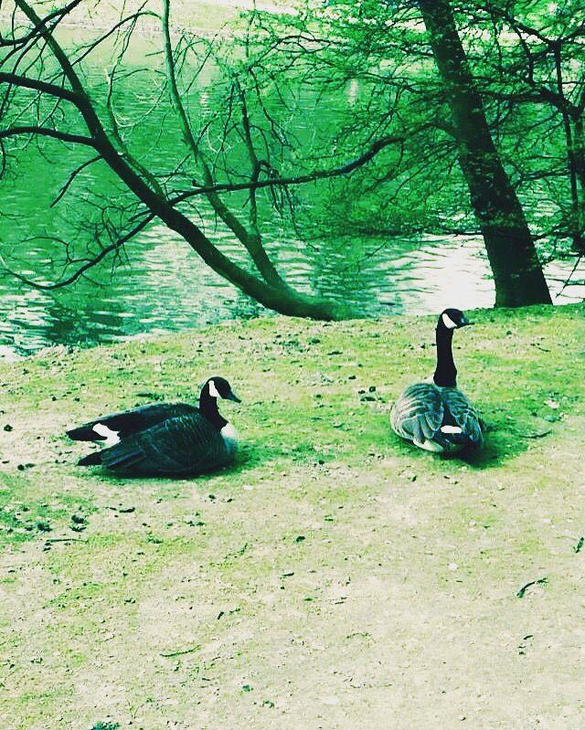 Situé au sud de Bruxelles, le Bois de la Cambre est l'un des espaces verts que les Bruxellois préfèrent. Ferme le week-end en partie à la circulation pour le plaisir des petits comme des grands afin que tous puissent y courir y faire du Roller ou du vélo