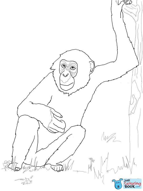 Bonobo Chimpanzee Coloring Page Monkey Coloring Pages Coloring