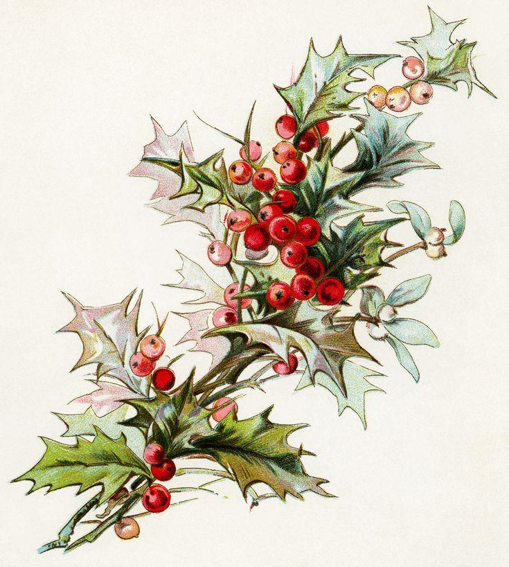 holly berries clip art, christmas greenery, holiday botanical image, vintage printable christmas, digital mistletoe and holly illustration