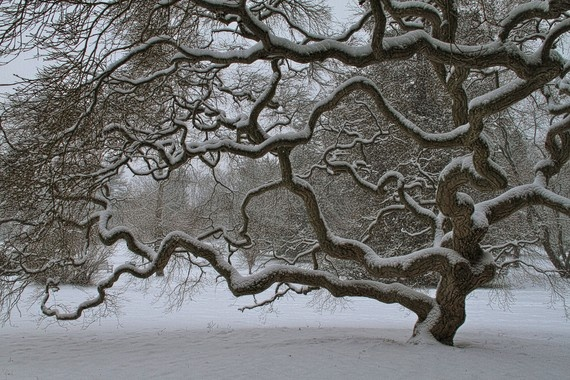 Japanese Maple Tree - we had one of these at Prairie and I loved viewing and photographing it. They're so cool.