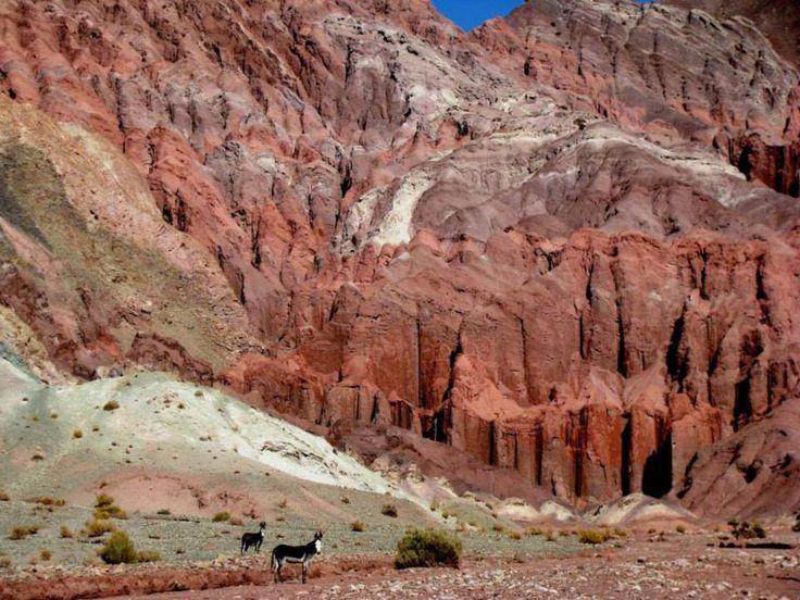 Hijos de los Sueños: Burros en el Valle del Arcoiris, Región de Antofagasta/Norte de Chile