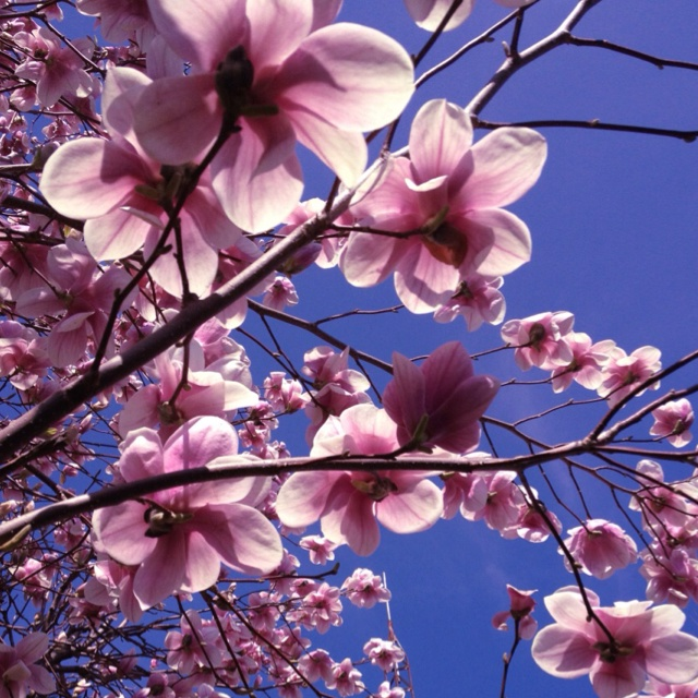 Sailorine: 17 Best Images About Flowery Trees On Pinterest