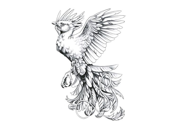 phoenix bird drawing
