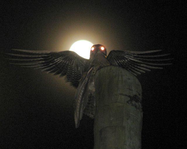 Mãe-da-lua, Nyctibius griseus por Marcelo Dutra | Wiki Aves